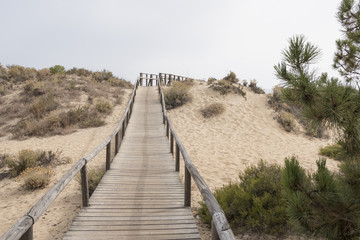 Huelva, Andalusia, Spain. Wooden walkway that crosses the natural park of Los Enebrales, near the park of Doñana.