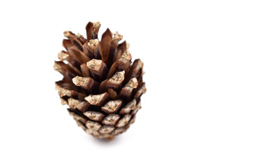 Pinecone stock images. Cone on a white background