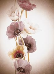 flores orquídeas efecto vintage