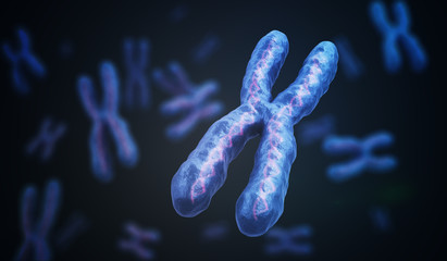 X Chromosomes with DNA molecules. Genetics concept. 3D rendered illustration.
