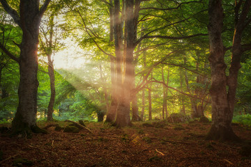 Sun rays throught a green forest in Entzia, Alava