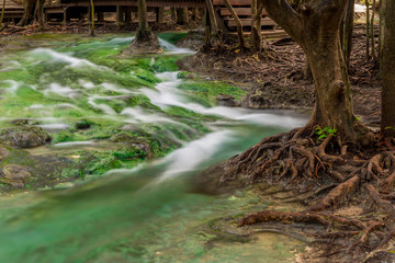 close-up of the current river water and the branched roots of the tropical tree in the jungles of Thailand