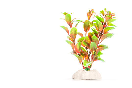 artificial aquarium plants isolated on white background