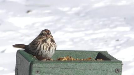 Fotoväggar - Birds on a Feeder in Snow
