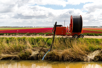 Irrigation machine on the tulip field