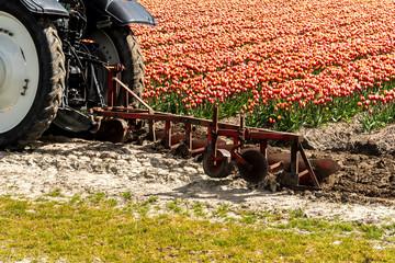 Tractor harrowing the tulip field