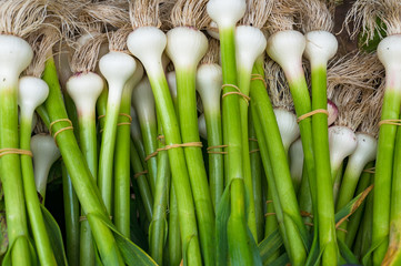 Bundles of fresh spring onion on farmers market