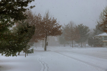Winter scene of a snow storm in this Central New Jersey neighborhood.