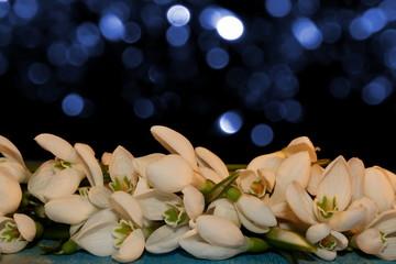 цветы подснежники лежат на деревянных досках  на блестящем фоне