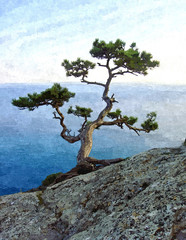Big green pine tree on the seaside cliff.