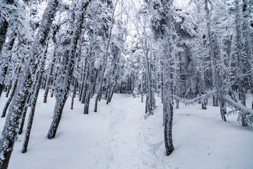 Snow covered trail in forest in winter