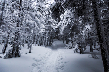 mountain winter trail