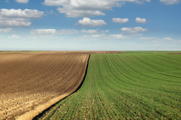 young green wheat and plowed field landscape spring season agriculture