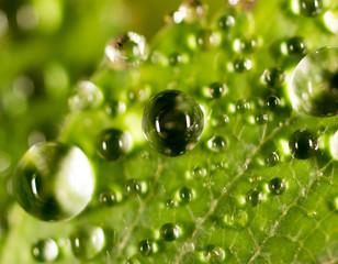 Krople rosy na zielony liść