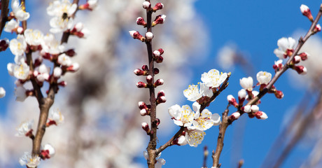 White flowers on a tree in spring