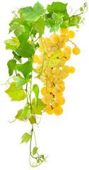 Fototapete - vigne et grappe de raisin blanc