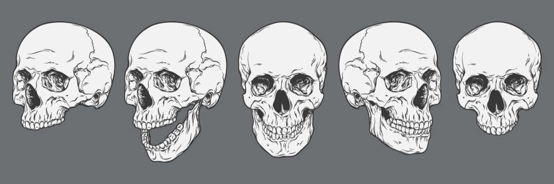 Anatomically correct human skulls set isolated. Hand drawn line art vector illustration