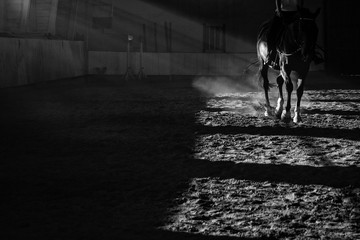 Details of a horse training with sun rays and dust inside a horseback riding school