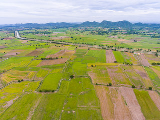 Aerial view of rice paddy in countryside with morning sunlight