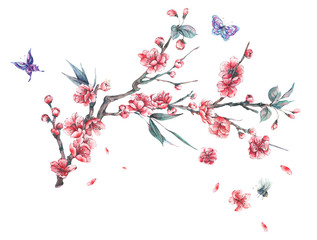 Watercolor spring pink blooming branches of cherry