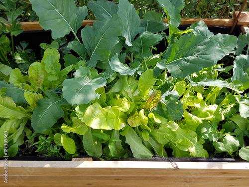 Hochbeet Kohlrabi Salat Stockfotos Und Lizenzfreie Bilder Auf