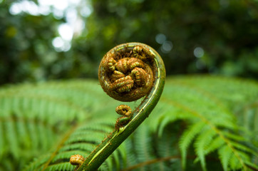 Fern Furl in Singapore