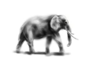 Hand drawing elephant. Digital illustration