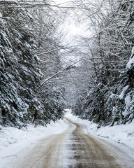 Snow covered road passing through forest in winter