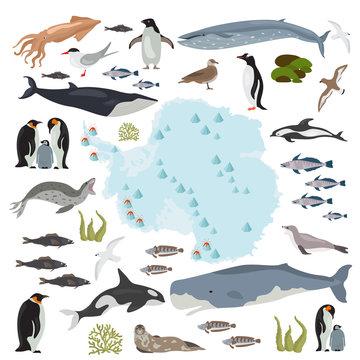 Antarctic, Antarctica,  flora and fauna map, flat elements. Animals, birds and sea life big set. Build your geography infographics collection