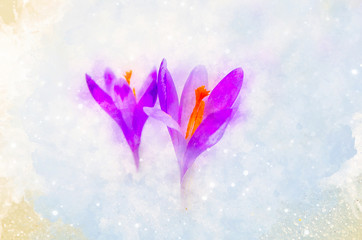 Spring flowers, saffron and softly blurred watercolor background.