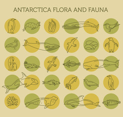 Flat Antarctica flora and fauna  elements. Animals, birds and sea life simple line icon set