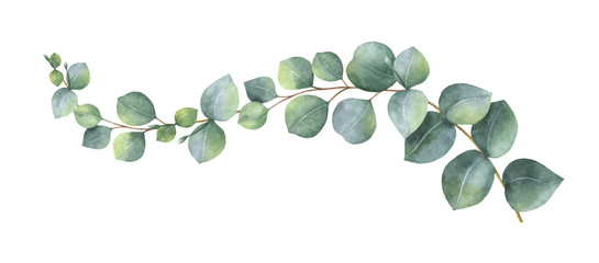 Watercolor vector wreath with green eucalyptus leaves and branches. Fotoväggar