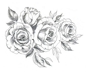 Hand drawn line art roses in graphic style. Feminine tattoo sketch, spring floral blooming, black and white illustration.