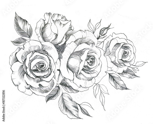 Hand Drawn Line Art Roses In Graphic Style Feminine Tattoo Sketch Spring Floral Blooming