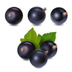 Blackcurrant berry realistic 3d vector illustration