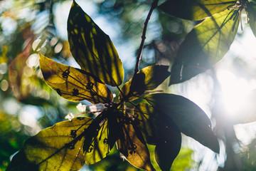 Sunbeam through the green leaves close up