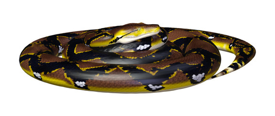 3D Rendering Reticulated Python on White
