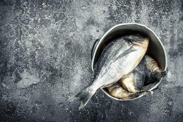 Fototapete - Fish in an old bucket.