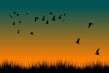 Pole trawa i sylwetki latający ptaki przy wschodem słońca