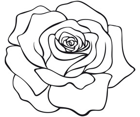 red rose blossom coloring page