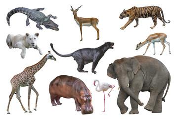 Wildlife isolated on white background