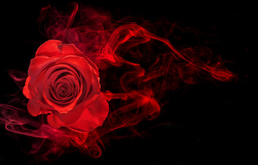 Photo sur Aluminium Roses rose wrapped in red smoke swirl on black background