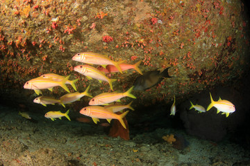 Fish on underwater coral reef