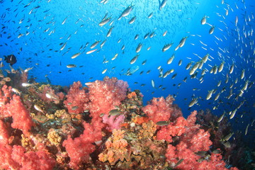 Coral reef underwater and fish