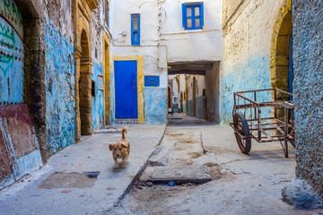 Puppy at the street, Essaouira