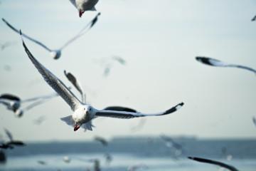 Seagull przy wschodem słońca Bangkok, Tajlandia czeka turystę karmić jedzenie