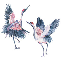 Set of watercolor red heads crane
