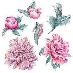 Set of vintage watercolor flowers peonies