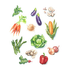 assorted farm fresh vegetables in hand painted watercolor illustration, set or collection of natural organic vegetable clip art, carrots, peas, egg plant, corn, salad ingredients,herbs, farm to table