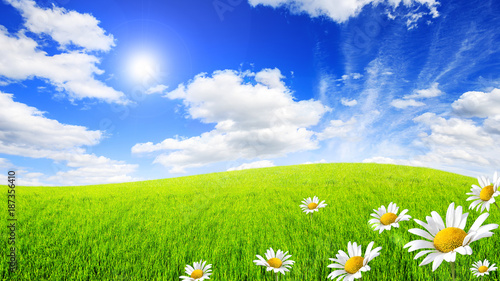 Fototapete Wild daisies in the green field with a blue sky